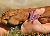 Historias de mascotas: Luchín y yo