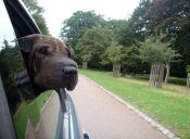 Historias de mascotas: El dolor de la separación, ¿con quién se queda el perro?