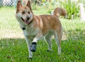 10 tips para proteger las patitas de tu perro del pavimento
