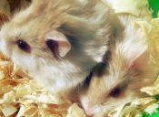 Historias de mascotas: el dominante de la relación