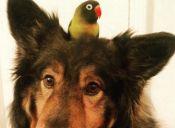 Jackson y Bird Noir: una pareja dispareja