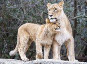 El amor de madre en el mundo animal