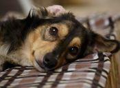 Rescate animal: Coquito volvió a la vida y espera ser adoptado