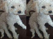Historias de mascotas: rescaté a Martín de la calle