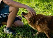 ¿Cómo hacerle cariño a un perro?