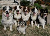 7 razas de perros ideales para personas solteras