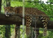 Decomisan más de cien animales en un zoológico particular de México