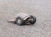 Video: Tortuga reemplaza sus patitas por modernas ruedas