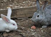 6 mitos sobre los conejos, que no conocías