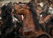 Firman acuerdo para cuidar a caballos salvajes de Tierra del Fuego