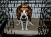 ¿Cómo cuidar el estrés en mascotas por cambio de casa?