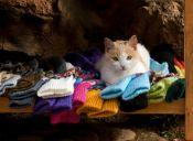 Gateras: Ideas para que tu gato se divierta