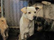 Estados Unidos: Policía investiga la muerte de 20 perritos en Arizona