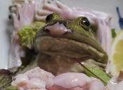 La protesta en contra de los japoneses que comen animales vivos en piezas de sushi