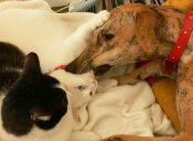 Patricia Cocas explicó los avances en Proyecto de Tenencia Responsable de Mascotas