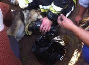 Bomberos y rescatista salvaron a dos perritos tras un incendio en San Antonio
