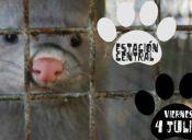 Activistas llamaron a protestar en contra de tienda de mascotas por maltrato animal