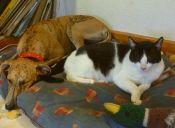 Buscan prohibir la venta de perros y gatos en tiendas de mascotas españolas