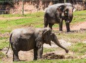 Israel: Elefantes protegen a sus crías ante cohete lanzado desde Gaza