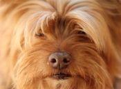 Cepillo iónico para mascotas: deja el pelaje brillante y elimina olores