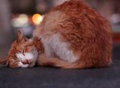 Chuncho, el gato que es