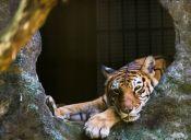 Animales diseñadores, el nuevo proyecto de un zoológico japonés