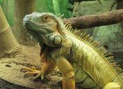 Tips para cuidar a tu iguana en invierno