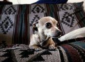 Epilepsia: También la sufren nuestras mascotas