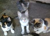 Anuncian plan de esterilización de mascotas en Placilla
