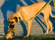 ¿Sabes por qué los perros se huelen entre sí para conocerse?