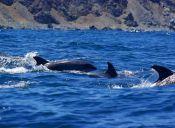 Turistas captan un impresionante cortejo fúnebre a pequeño delfín
