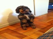Curiosidades de Mascotas: