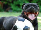 10 Tips para tener feliz a tu mascota