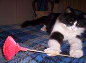 Carácter en los gatos: Cuatro tipos más comunes