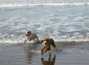 ¿Playa para perros? Conoce la propuesta de