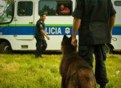 ¡Policía animal! Holanda creó su propia división en defensa de las especies