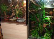 Tips para construir tu propio terrario