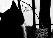 Historias de Mascotas: