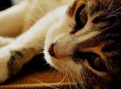 Estados Unidos: Hombre tenía 50 cadáveres de gatitos congelados en su casa