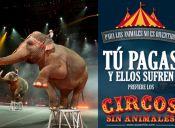 Sociedad Chilena de Protección Animal hizo un llamado a no visitar circos con animales