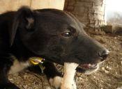 ¿Por qué a los perros les gusta morder huesos?