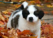 Cachorros con hipo: ¿Cómo ayudarlos?