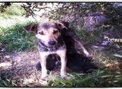 Historia de la 'Quiltris' y sus perritos