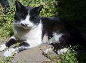 La historia de 'Pepito': de gatito olvidado a ser el regalón de la casa