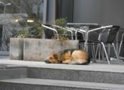 5 motivos por los que deberías adoptar a una mascota y no comprar