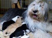 Perrita adoptó a cachorro de león abandonado en zoológico de Polonia