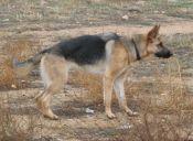 Proyecto busca retirar a perros salvajes en zonas rurales por riesgo sanitario