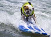 'Dogspotting': Fotografiar perros se convirtió en un deporte