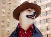 'Boshi', el perrito que modela ropa varonil en Instagram