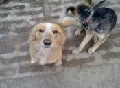 Historias de Mascotas: 'Zidane', el perro cuico del barrio